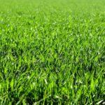 Najboljši čas za gnojenje trave je spomladi