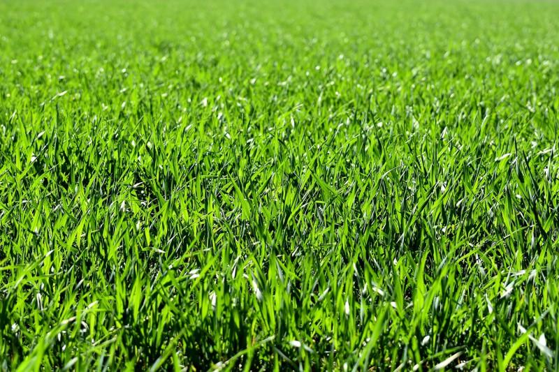 Skrivnost zdravega in sijočega travnika